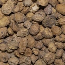 Graines Tigernuts Amorçage...