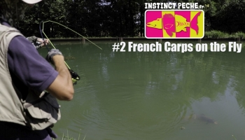 VIDEO : FRENCH CARPS ON THE FLY